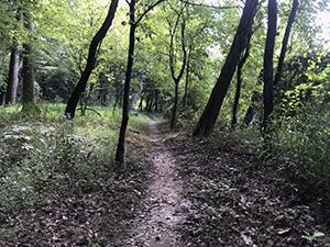 Horne Creek Trail at Pilot Mountain State Park, Pinnacle, NC. Photo by L. Knepp.