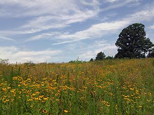 Pilot Creek Meadow Walk at Pilot Mountain State Park, Pinnacle, NC. Photo by M. Windsor.