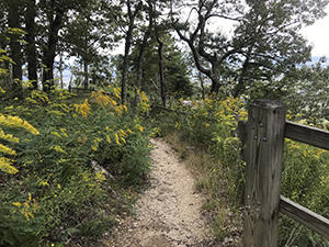Sassafras Trail (Kids TRACK Trail) at Pilot Mountain State Park, Pinnacle, NC. Photo by L. Knepp.