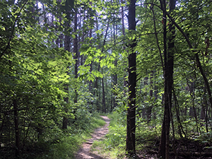 Yadkin Islands Trail at Pilot Mountain State Park, Pinnacle, NC. Photo by U. Tomlinson.