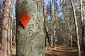 Orange diamond blaze marks Pott's Branch trail.
