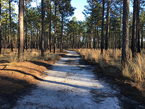 Wire Grass Loop Trail at Carvers Creek State Park, Fayetteville, NC