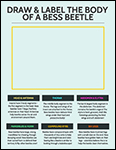 Draw and Label the Body of a Bess Beetle worksheet screenshot
