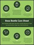 Bess Beetle Care info sheet screenshot