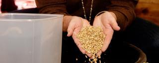 Grains held in two hands
