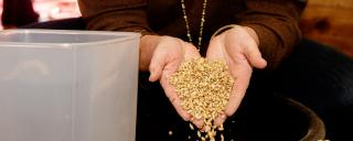 Grains held in two hands