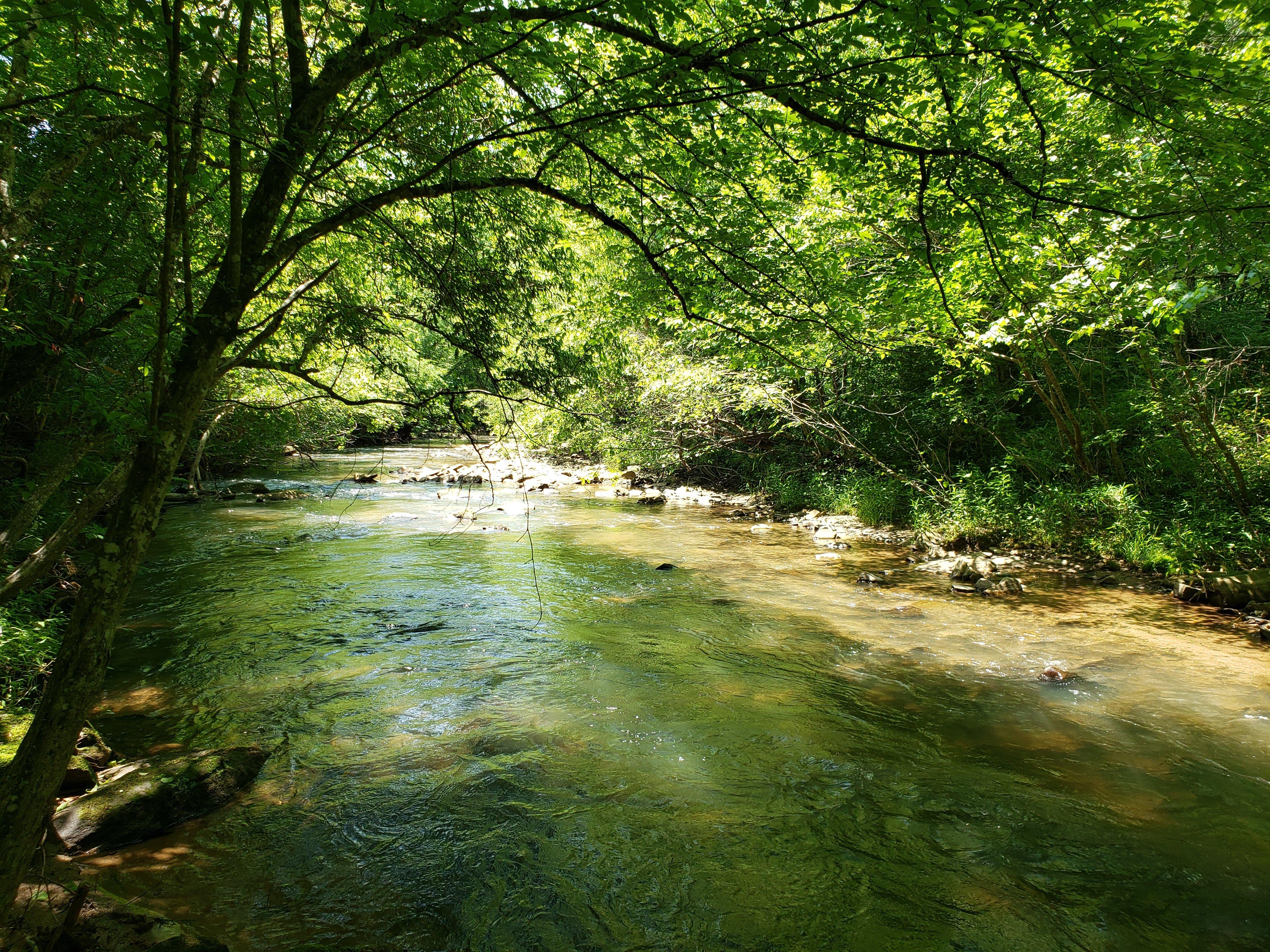 Bobs Creek Wilderness by Damon Hearne 20190524_122738.jpg