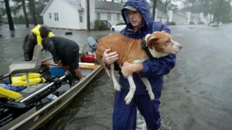 Dog being rescued from floodwaters