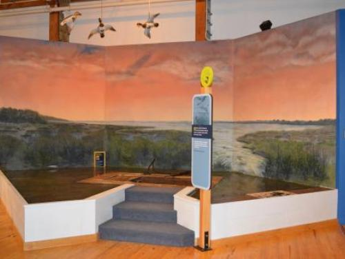 Waterfowl heritage exhibit in the Adventure Museum at Roanoke Island Festival Park