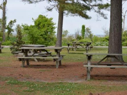 Outdoor picnic area at Roanoke Island Festival Park