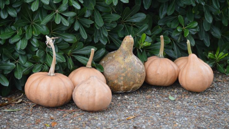 Harvest from American Indian Town at Roanoke Island Festival Park